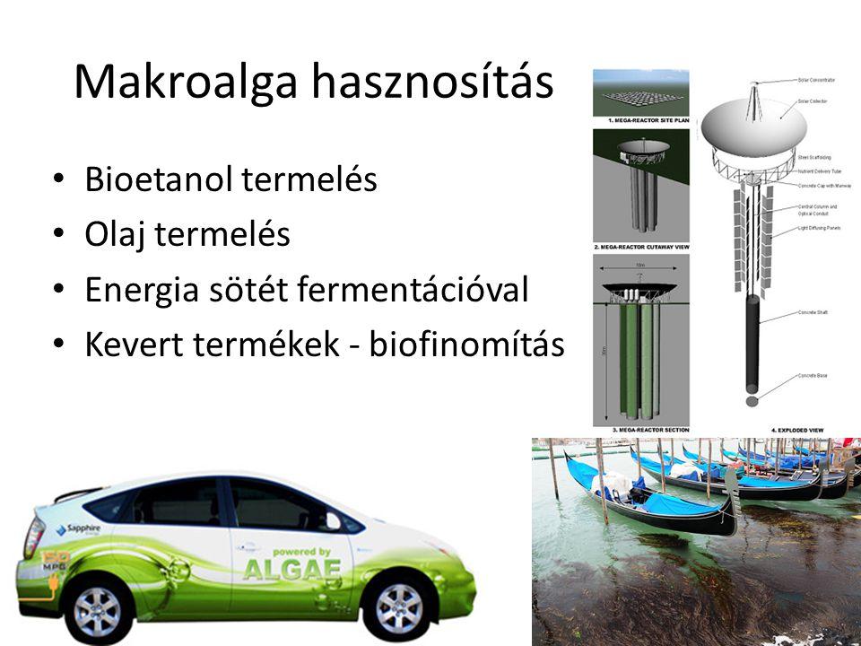 Mikroalga etanol Kihasználatlan területeken Nagy tömegű tenyésztés Fotoszintézis és sötét fermentáció
