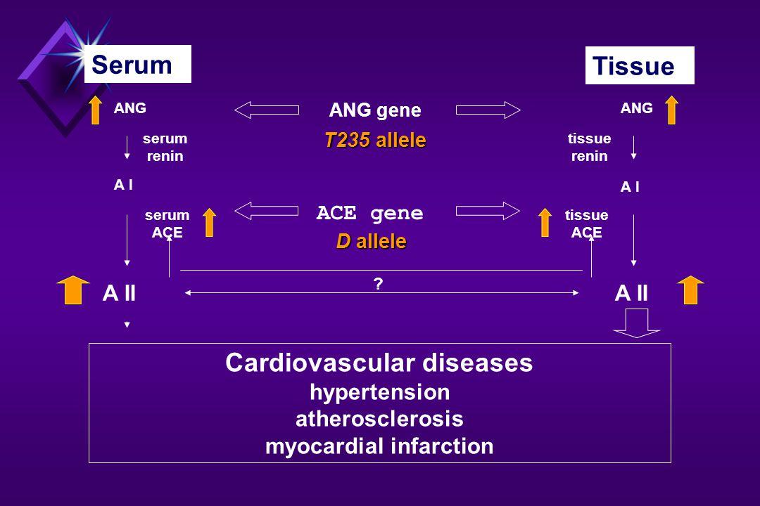 VASCULARIS RIZIKÓFAKTOROK A proteinuria a mortalitás egyik fontos rizikófaktora Az endothel funkció sérülése fokozza az érfal permeabilitását, rontja az erek tágulékonyságát : NO/Endothelin, PGI2.