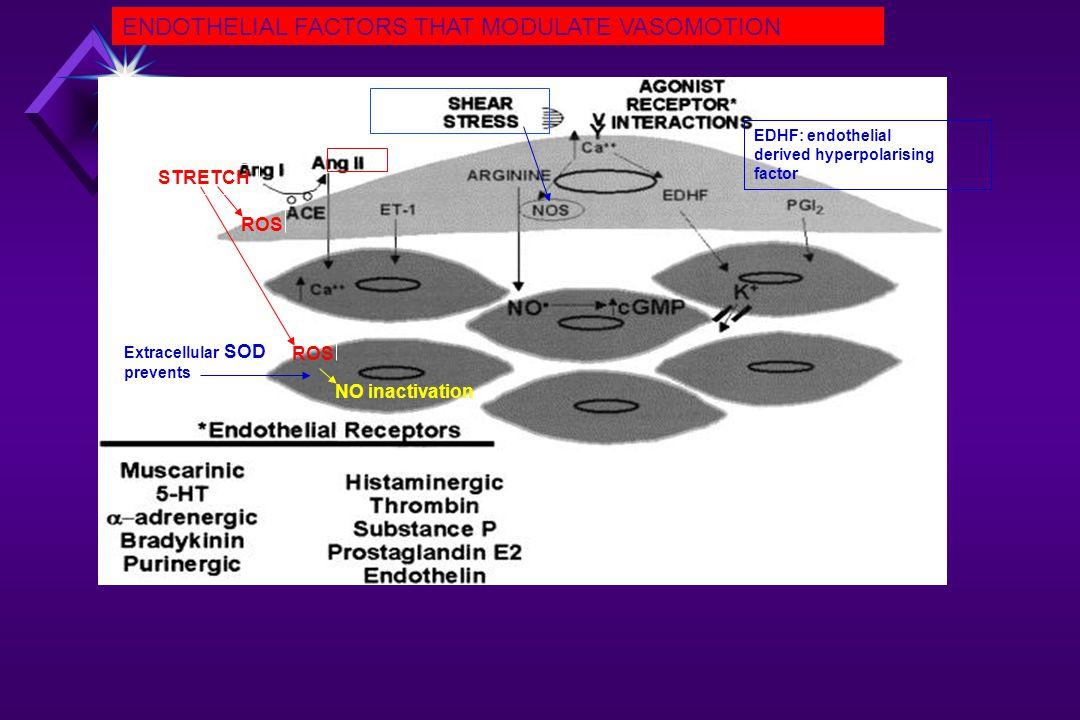 (asymetric dimethyl- arginie: Arginine antagonist) Oxidation Lipid radicals Oxidation Peroxynitrite eNOS cofactor BH 3 BH 2 Hypertenson Atherosclerosis Coronary artery disease Hypercholesterolemia Hypertension Diabetes mellitus MECHANISMS UNDERLYING ALTERED NO-PRODUCTION