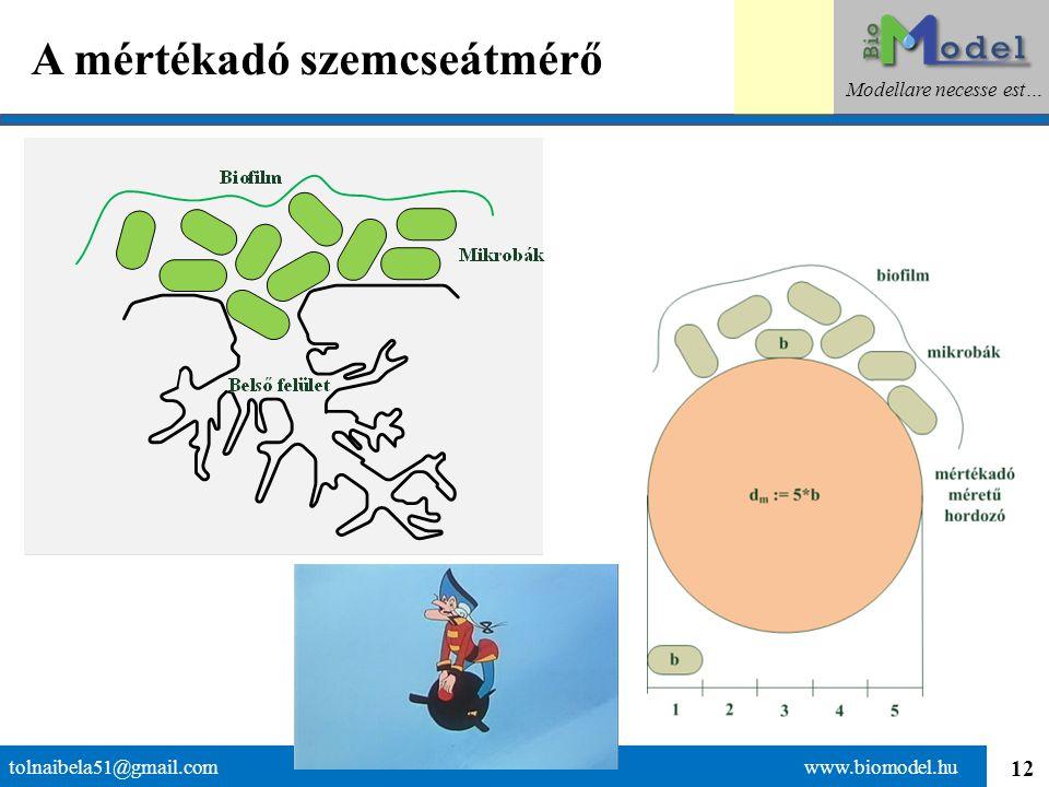 13 Az adszorpció tolnaibela51@gmail.com www.biomodel.hu Modellare necesse est…