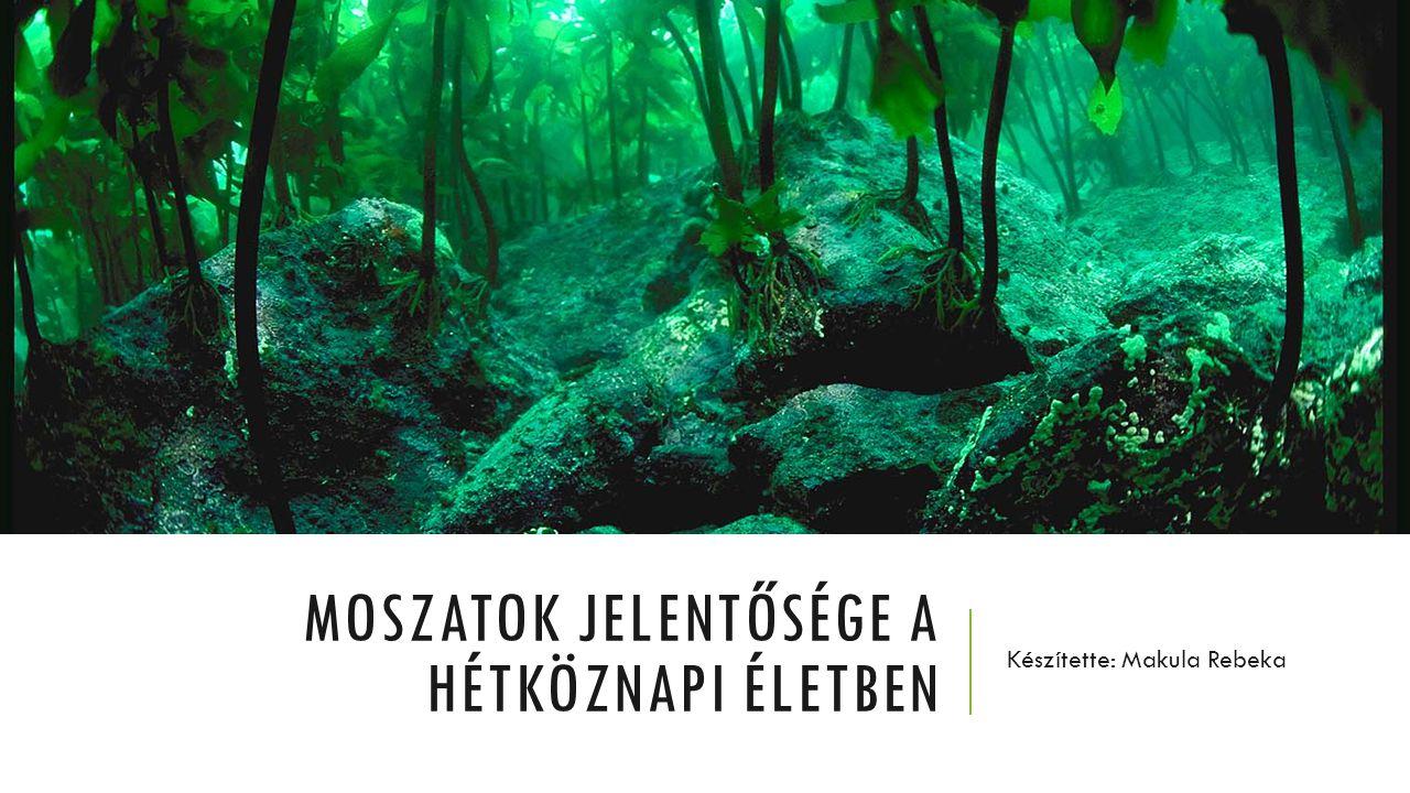 TARTALOM Moszat Alga Alga arcpakolás Spirulina kapszula Tengeri alga kapszula Alga kálcium gél