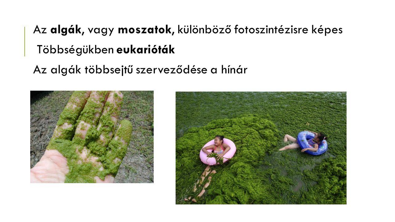 MOSZAT Az édesvízi és a tengeri moszatok egymástól nagymértékben különböző, vízben élő algafélék.