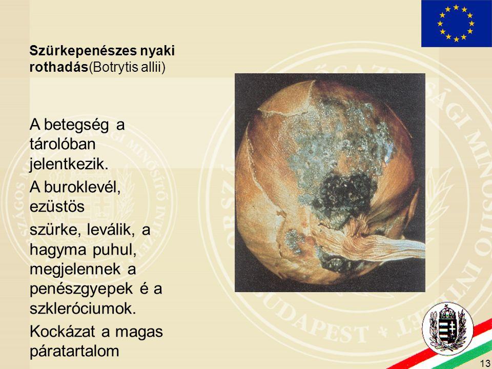 14 Aspergillus niger A betegség a felszedés után jelentkezik.