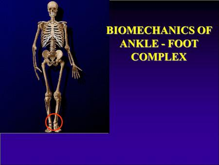 BIOMECHANICS OF ANKLE - FOOT COMPLEX A bokaizület biomechanikája.