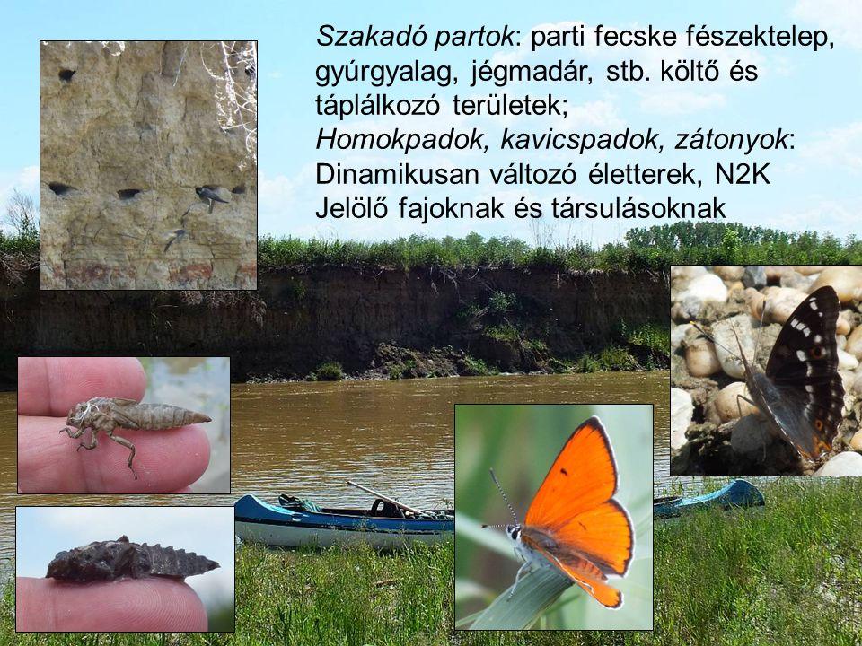 Mentett oldali és hullámtéri mocsárrétek, láprétek (rendszeres felszíni és felszín alatti vízhatás) Puhafás és keményfás galériaerdők
