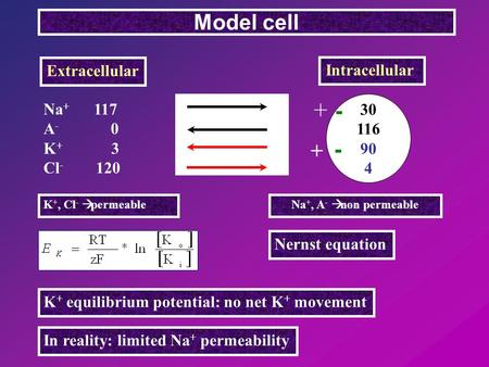 Na + 117 A - 0 K + 3 Cl - 120 Model cell Extracellular Intracellular 30 116 90 4 Nernst equation K + equilibrium potential: no net K + movement In reality: