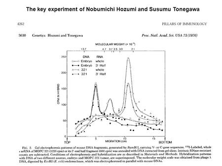 The key experiment of Nobumichi Hozumi and Susumu Tonegawa.
