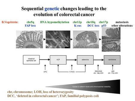 Sequential genetic changes leading to the evolution of colorectal cancer chr, chromosome; LOH, loss of heterozygosity DCC, 'deleted in colorectal cancer';