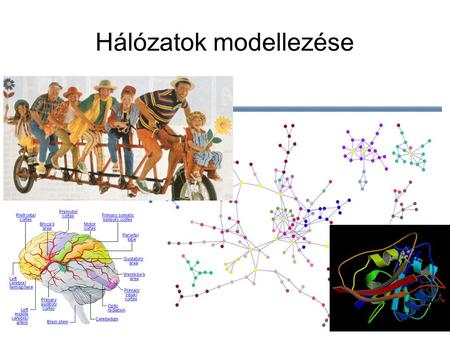 Hálózatok modellezése. Hálózatok Many complex systems in nature and society can be successfully represented in terms of networks capturing the intricate.