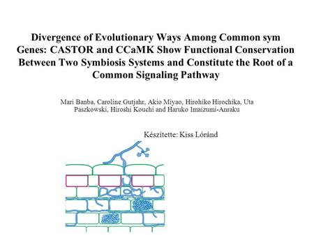 Divergence of Evolutionary Ways Among Common sym Genes: CASTOR and CCaMK Show Functional Conservation Between Two Symbiosis Systems and Constitute the.