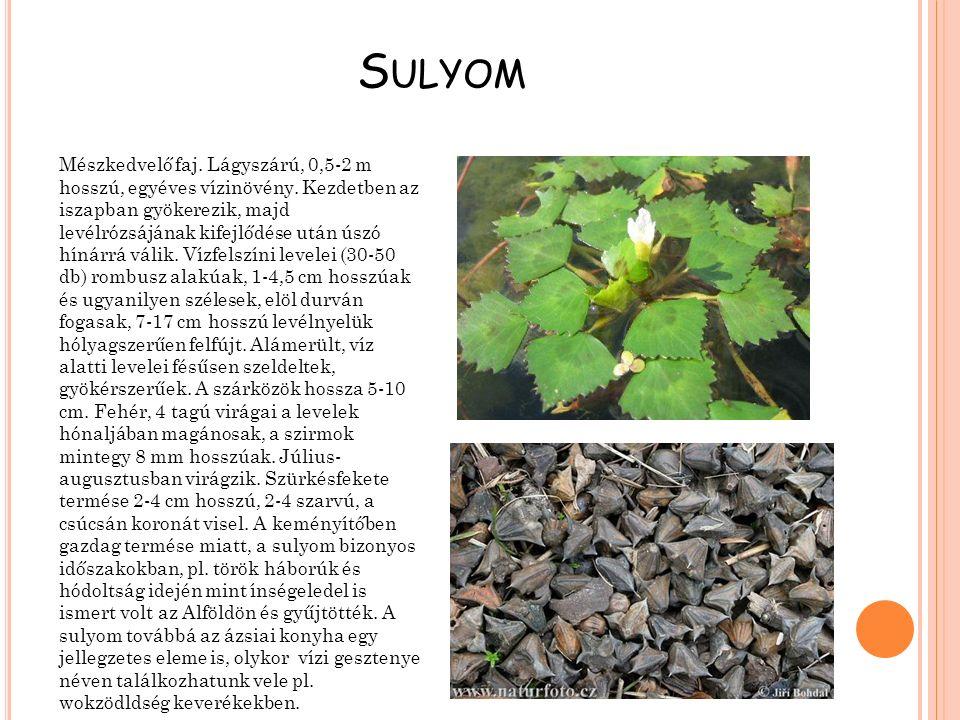 Sulyom