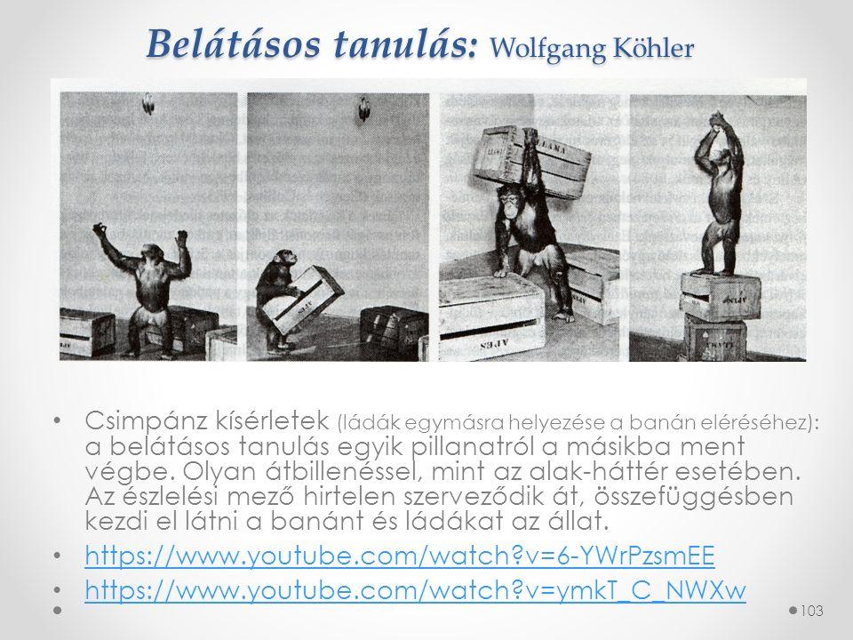 Belátásos tanulás: Wolfgang Köhler