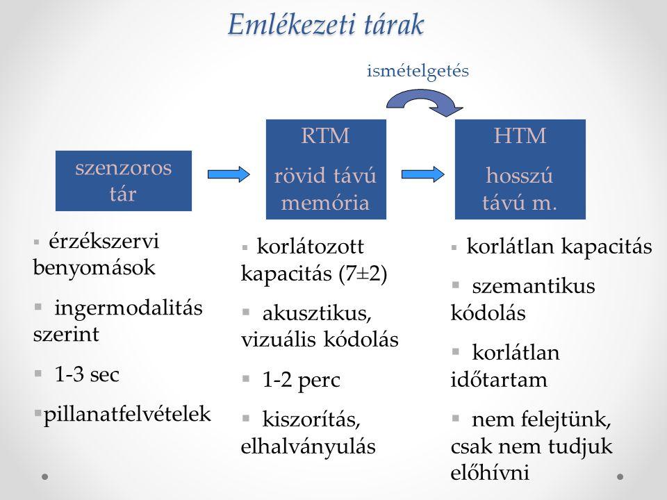 Emlékezeti tárak RTM rövid távú memória HTM hosszú távú m.