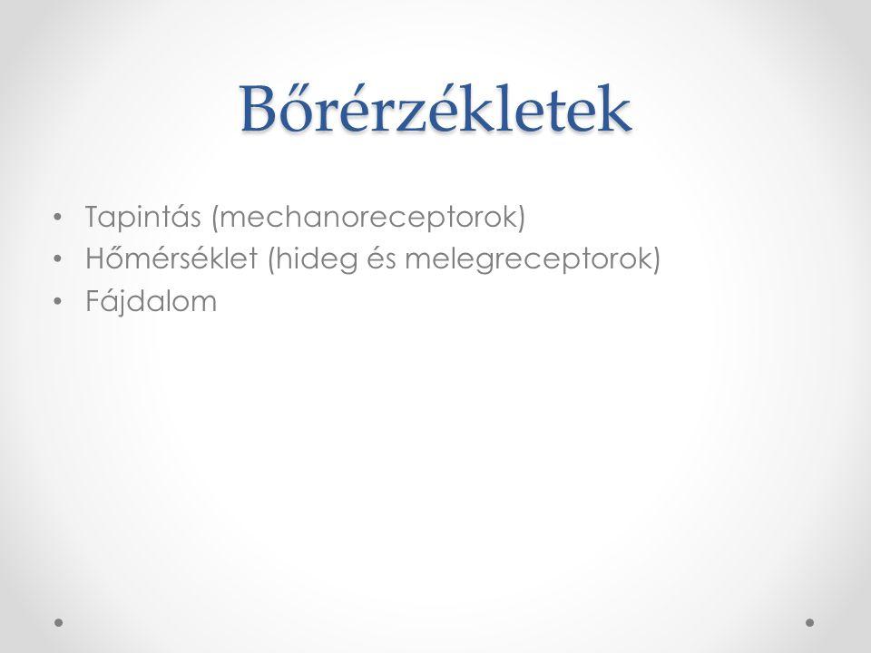 Bőrérzékletek Tapintás (mechanoreceptorok)