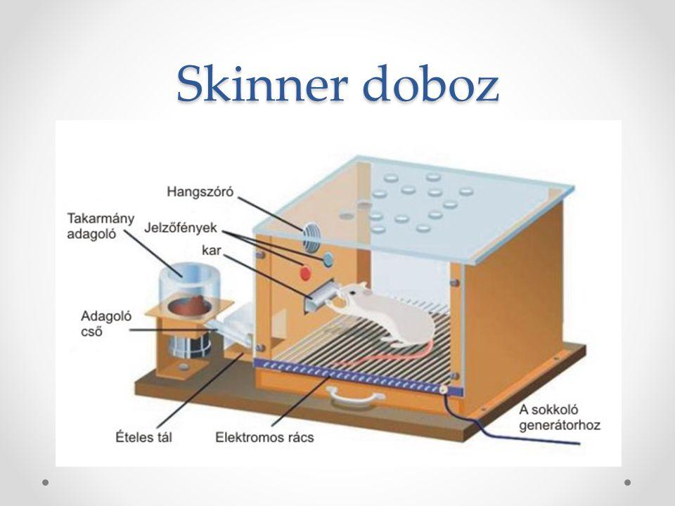 Skinner doboz