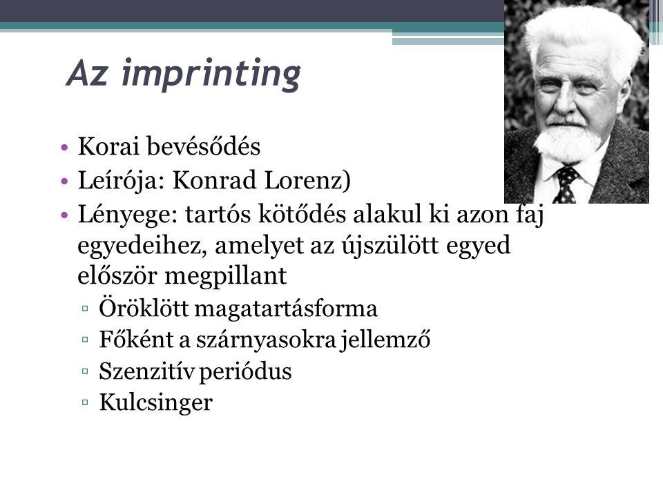 Az imprinting Korai bevésődés Leírója: Konrad Lorenz)