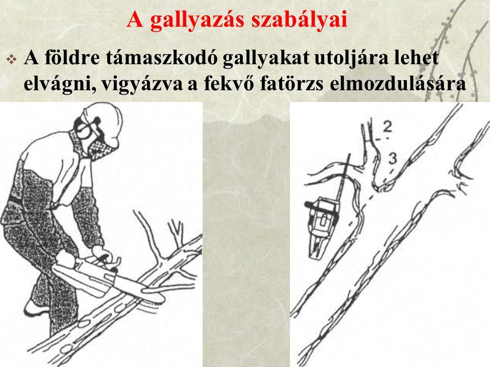 A gallyazás szabályai A földre támaszkodó gallyakat utoljára lehet elvágni, vigyázva a fekvő fatörzs elmozdulására.