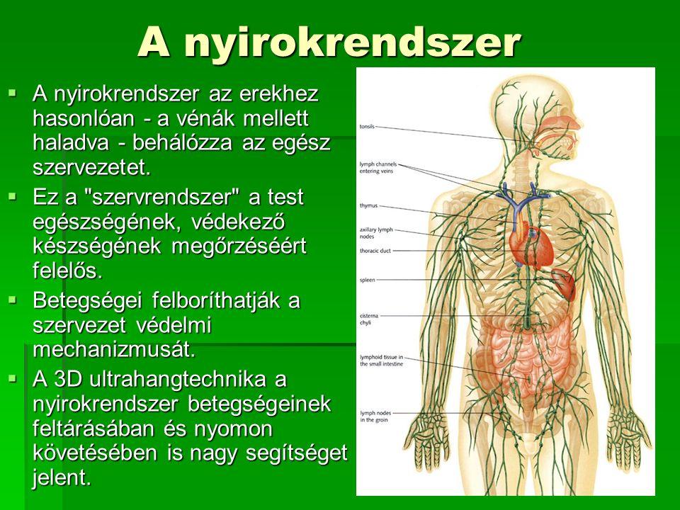 A nyirokrendszer A nyirokrendszer az erekhez hasonlóan - a vénák mellett haladva - behálózza az egész szervezetet.