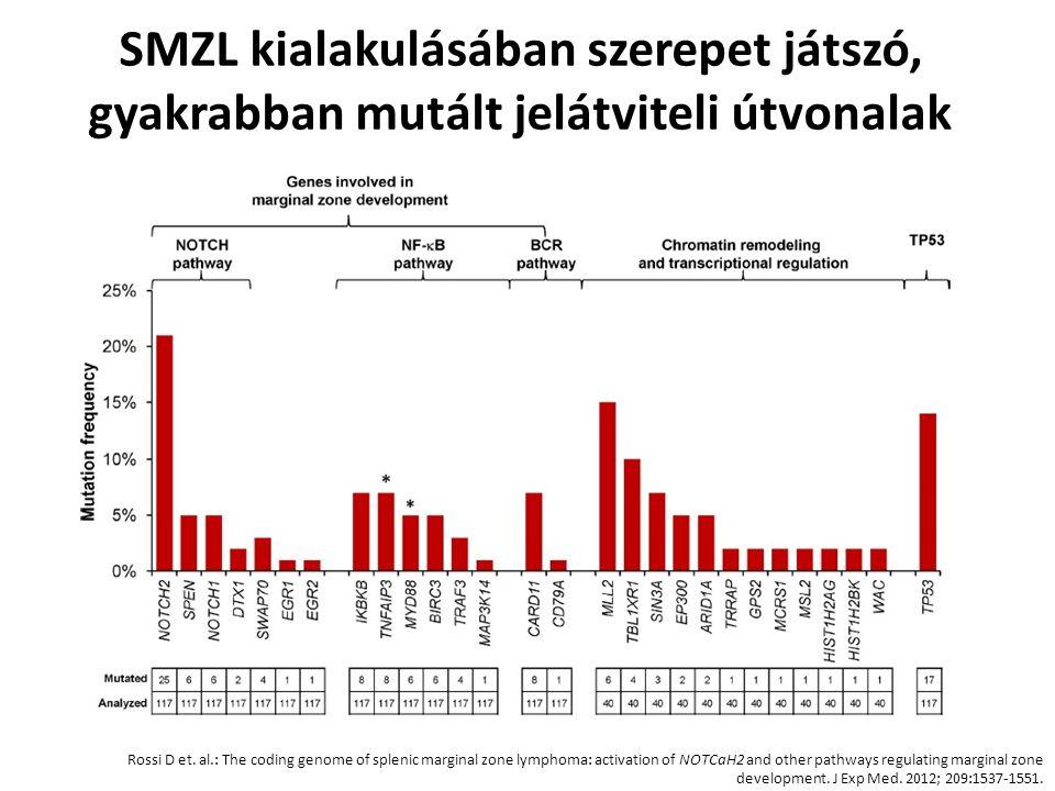 SMZL kialakulásában szerepet játszó, gyakrabban mutált jelátviteli útvonalak