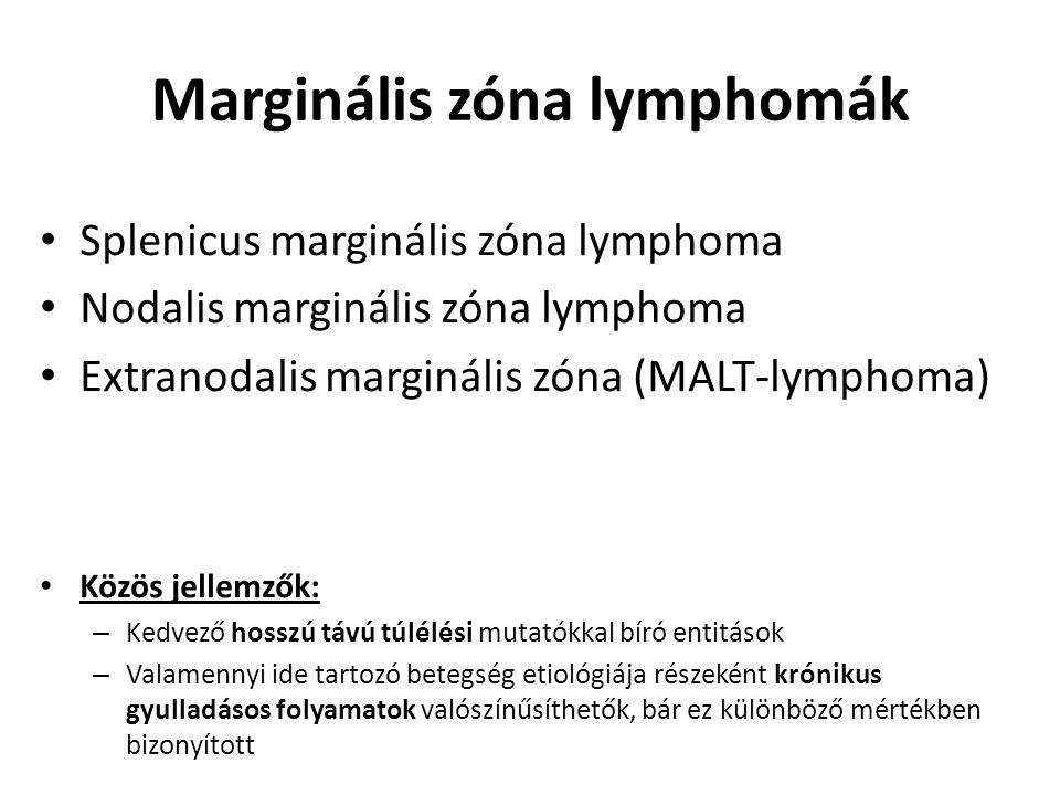 Marginális zóna lymphomák