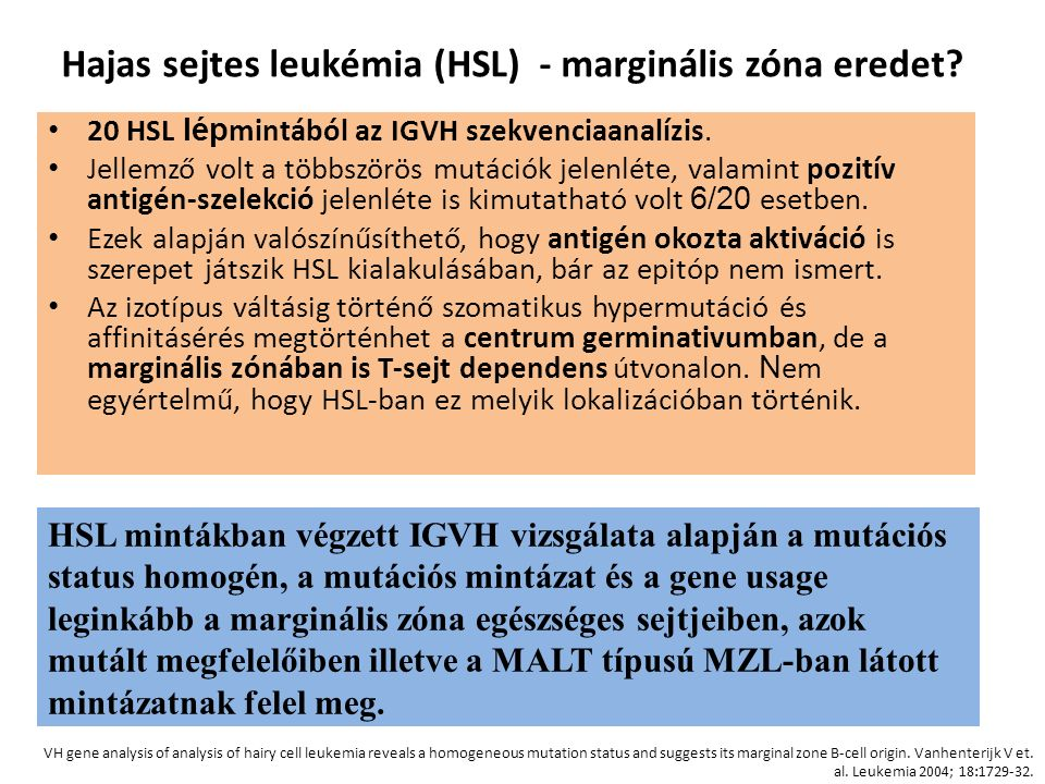 Hajas sejtes leukémia (HSL) - marginális zóna eredet