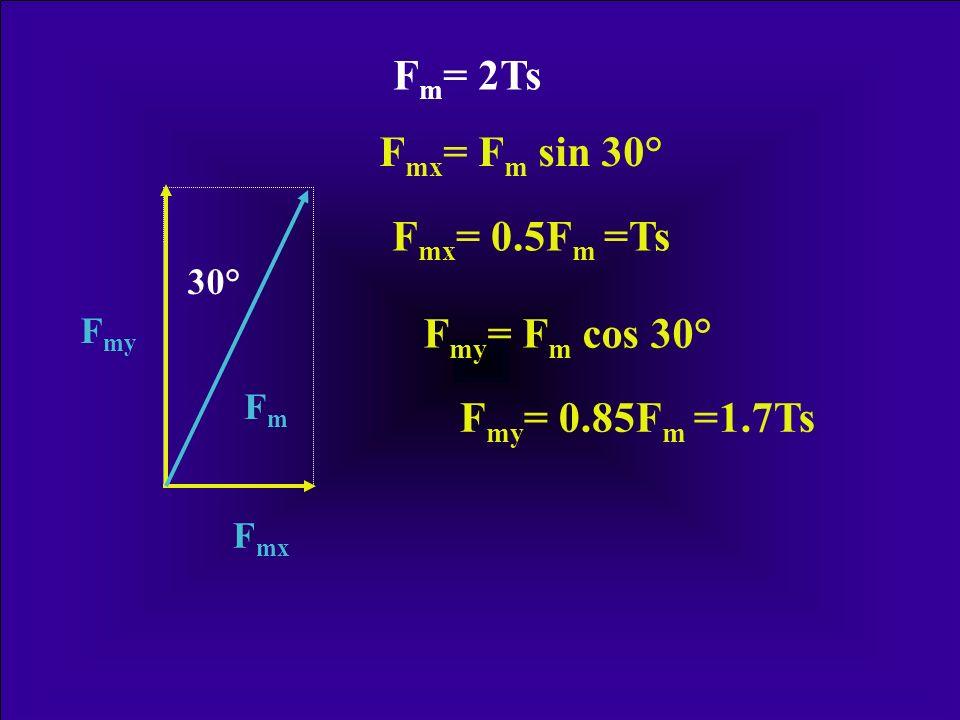 Fm= 2Ts Fmx= Fm sin 30° Fmx= 0.5Fm =Ts Fmy= Fm cos 30°