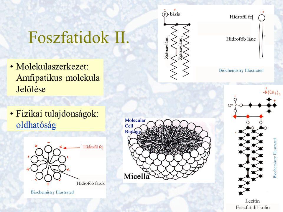 Foszfatidok II. Molekulaszerkezet: Amfipatikus molekula Jelölése