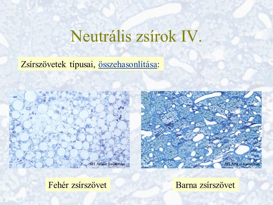 Neutrális zsírok IV. Zsírszövetek típusai, összehasonlítása: