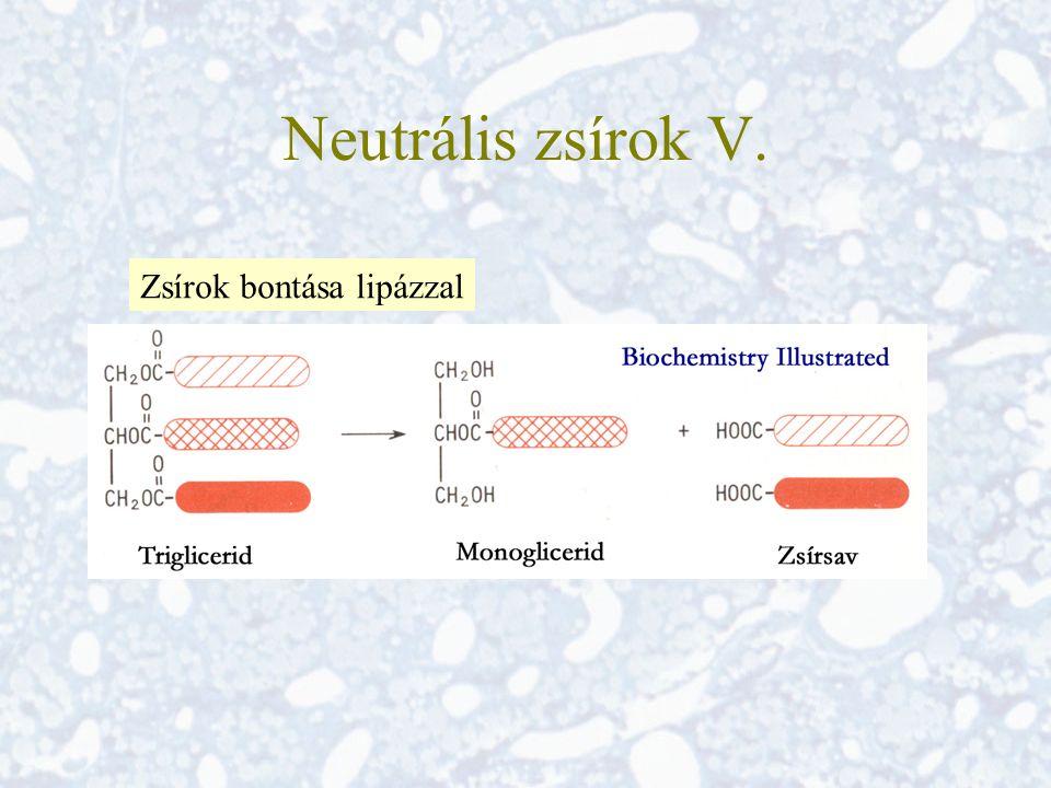 Neutrális zsírok V. Zsírok bontása lipázzal