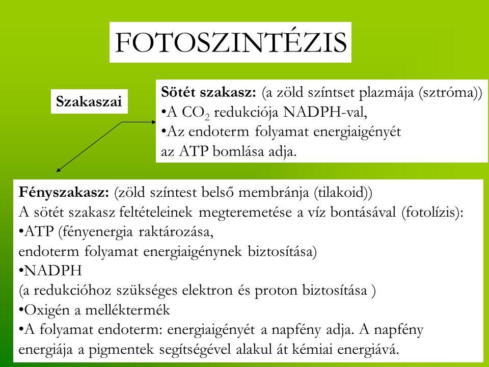FOTOSZINTÉZIS Sötét szakasz: (a zöld színtset plazmája (sztróma))