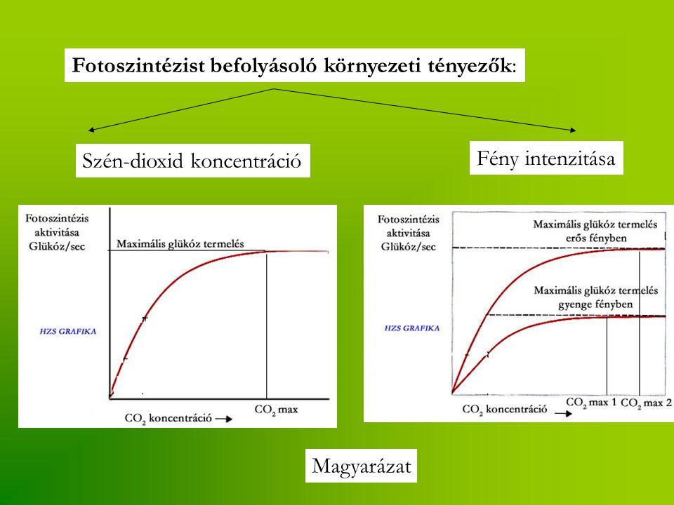 Fotoszintézist befolyásoló környezeti tényezők: