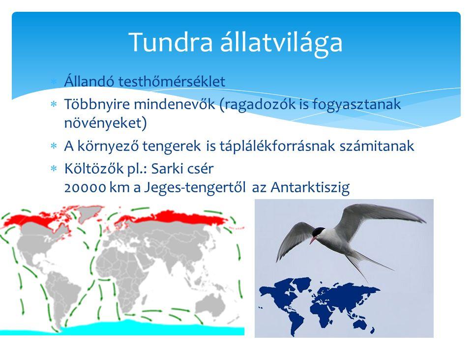 Tundra állatvilága Állandó testhőmérséklet