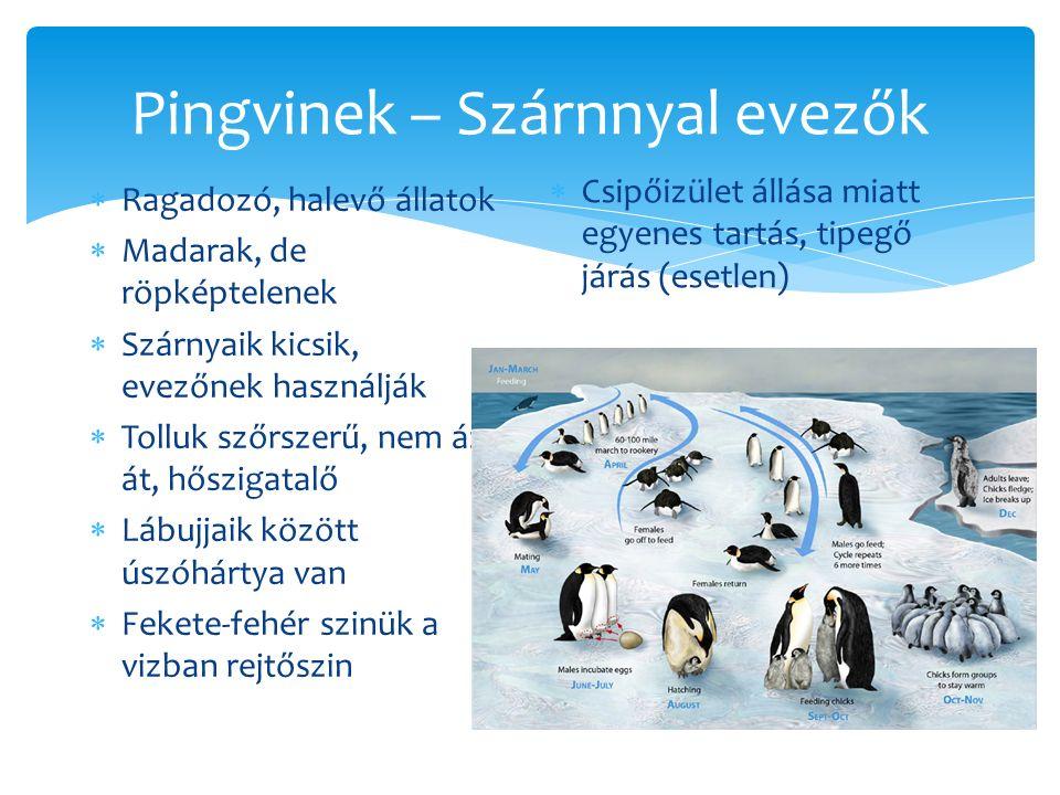 Pingvinek – Szárnnyal evezők
