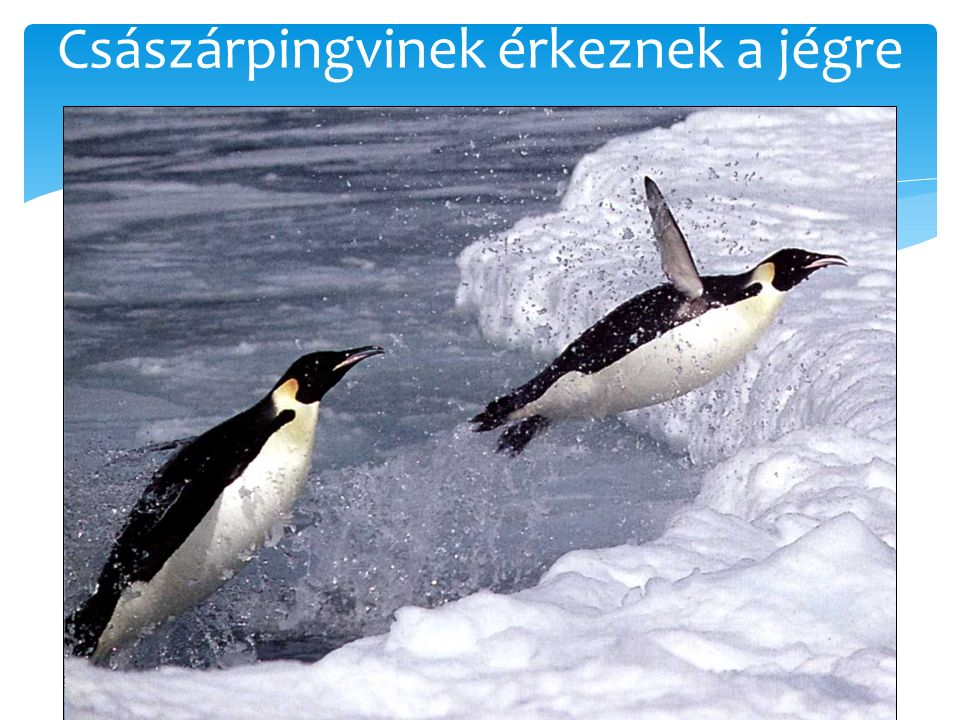 Császárpingvinek érkeznek a jégre