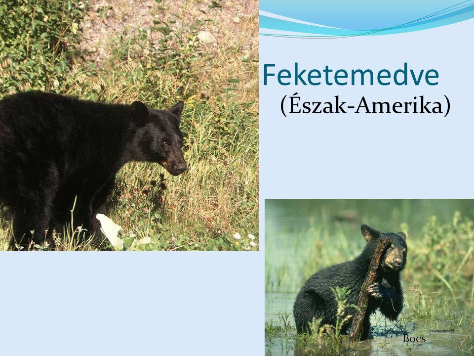 Feketemedve (Észak-Amerika) Észak-Amerika CD, Kossuth Kiadó Bocs