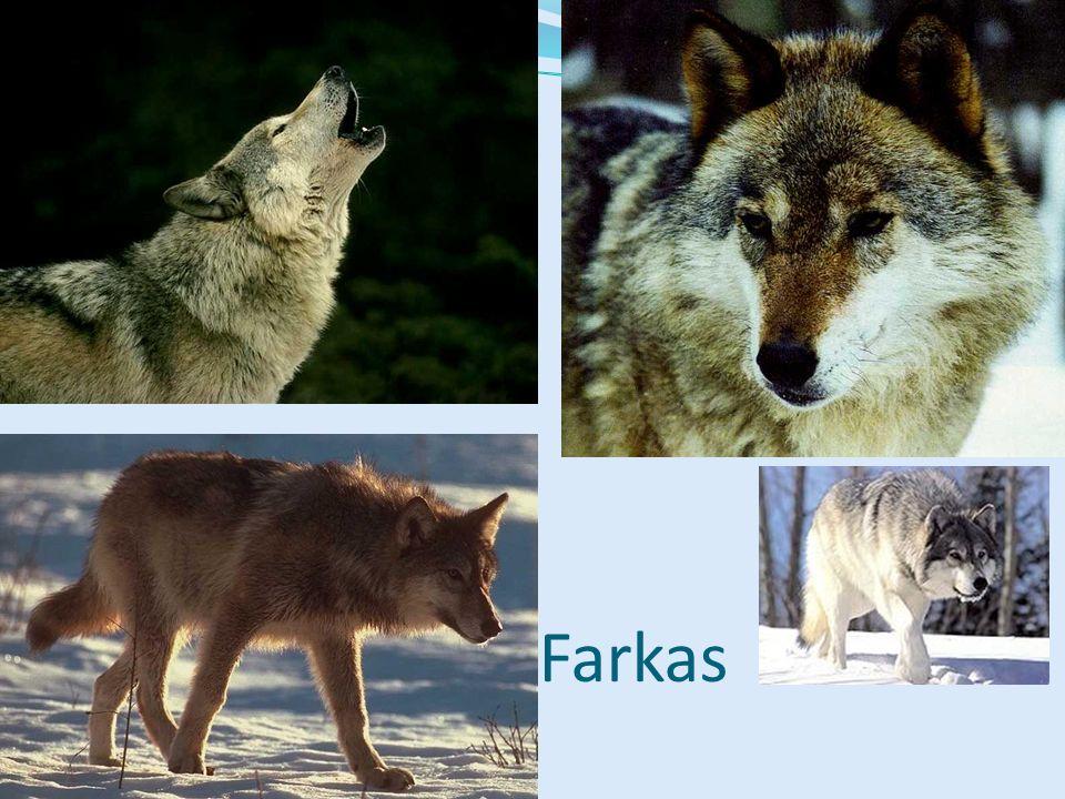 Farkas Bal felső kép: Emlősök CD, Kossuth Kiadó