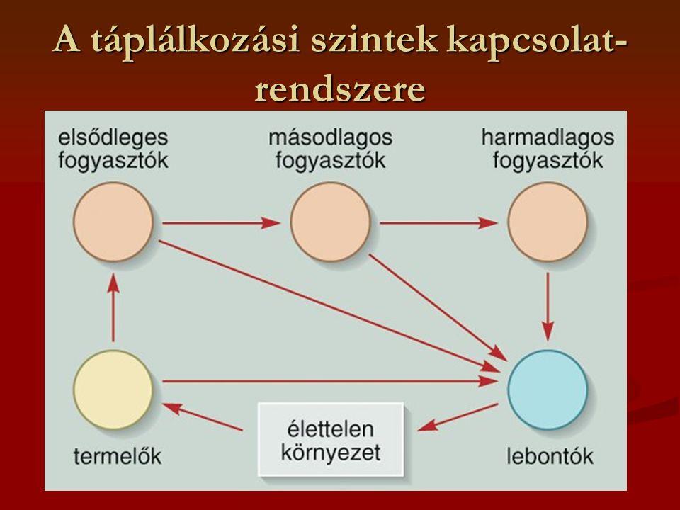 A táplálkozási szintek kapcsolat-rendszere