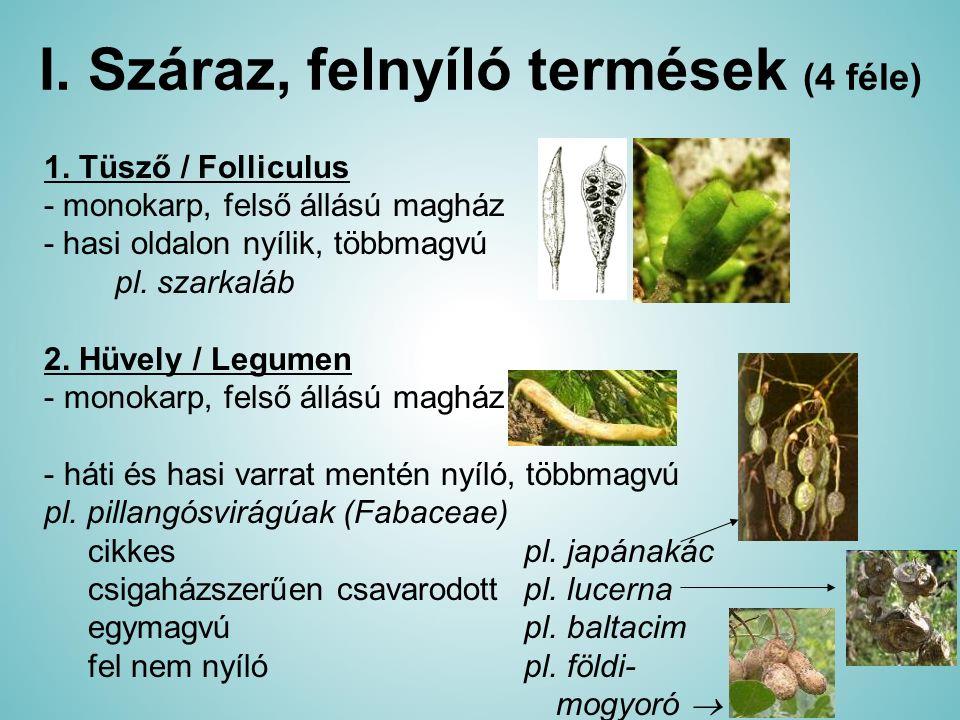 I. Száraz, felnyíló termések (4 féle)