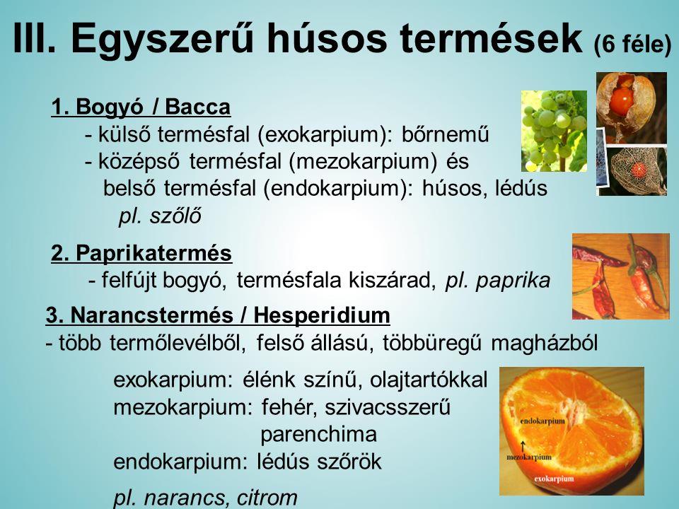 III. Egyszerű húsos termések (6 féle)