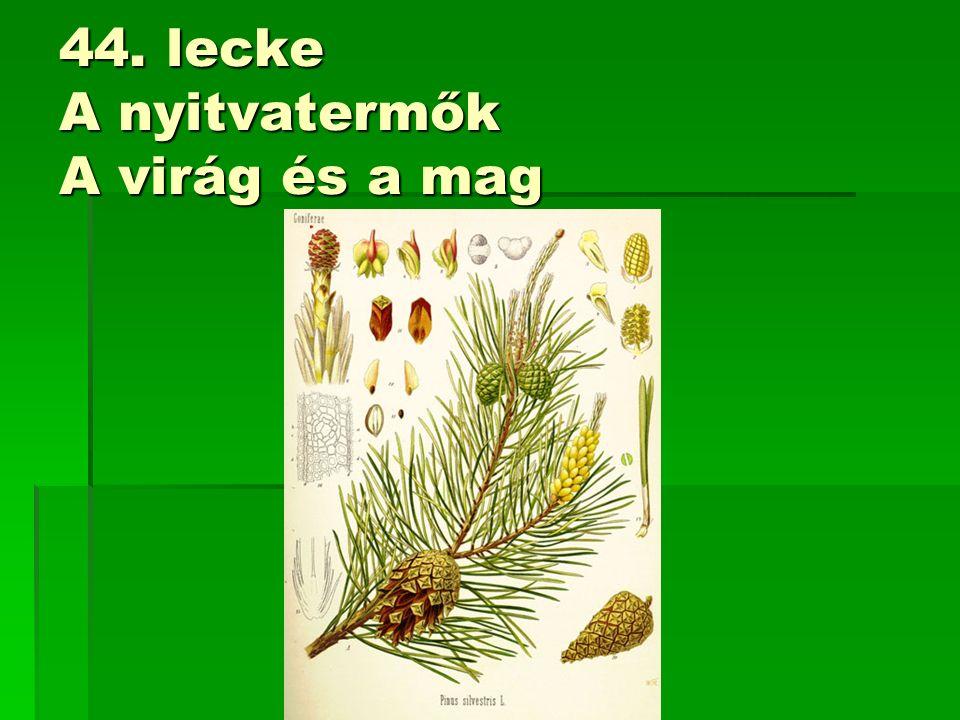 44. lecke A nyitvatermők A virág és a mag