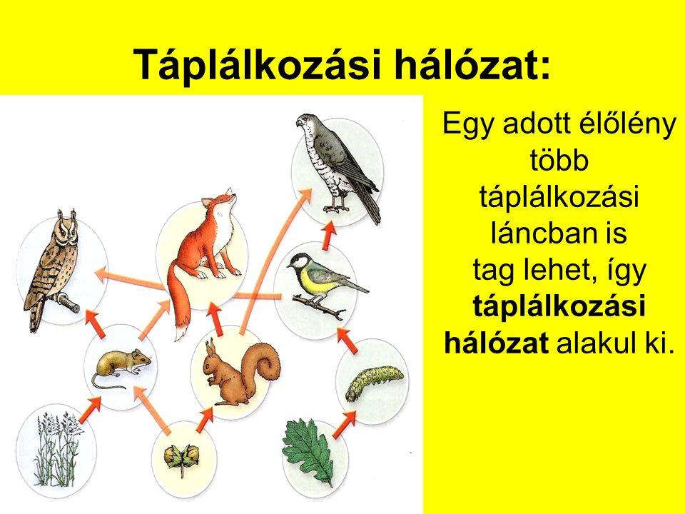 Táplálkozási hálózat: