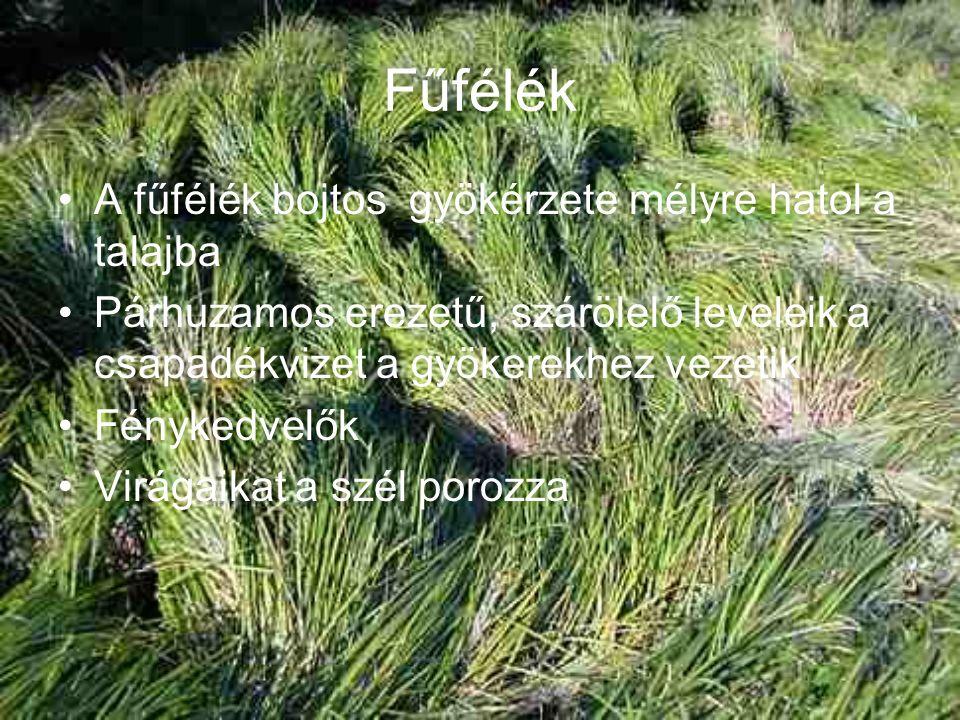 Fűfélék A fűfélék bojtos gyökérzete mélyre hatol a talajba