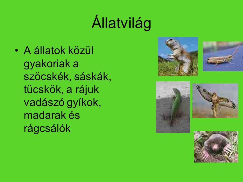 Állatvilág A állatok közül gyakoriak a szöcskék, sáskák, tücskök, a rájuk vadászó gyíkok, madarak és rágcsálók.