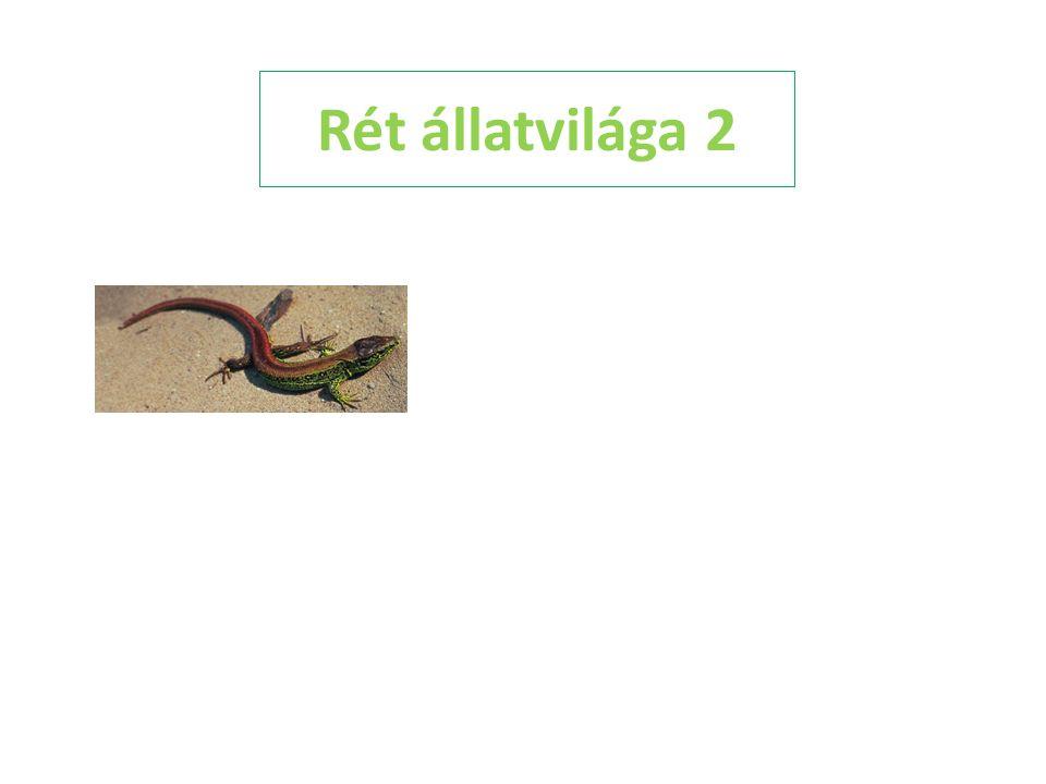 Rét állatvilága 2