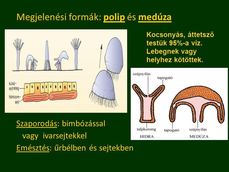 Megjelenési formák: polip és medúza