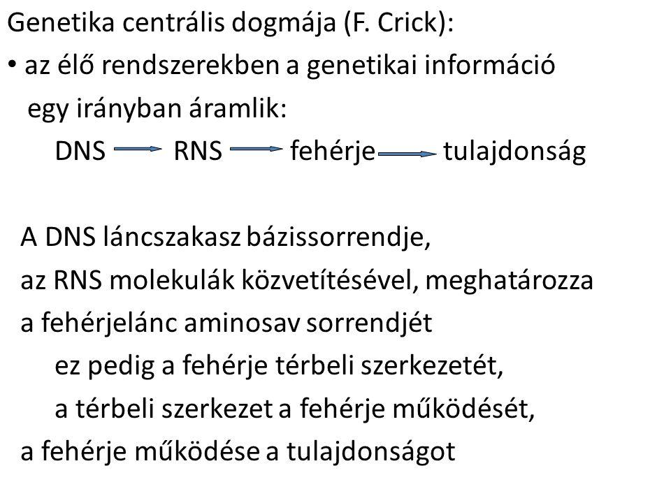Genetika centrális dogmája (F. Crick):