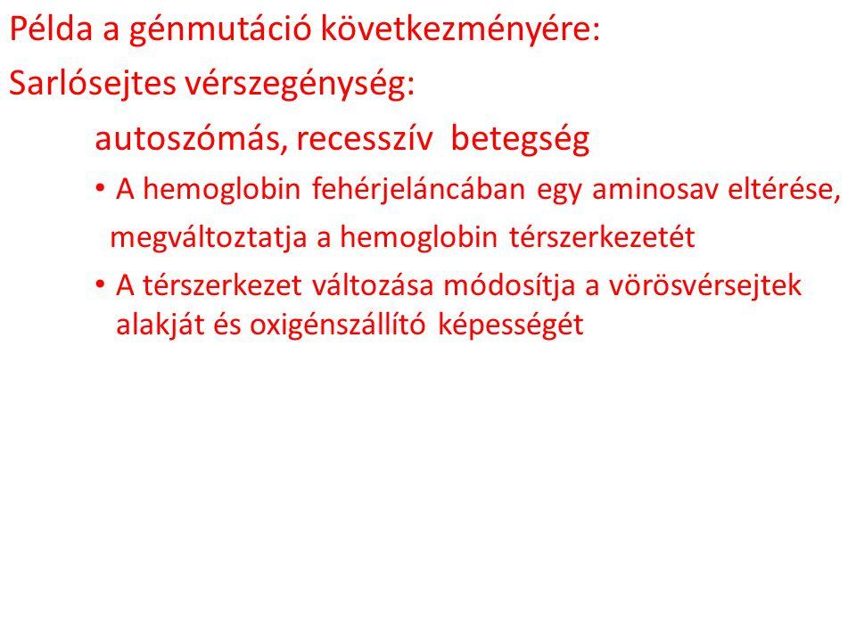 Példa a génmutáció következményére: Sarlósejtes vérszegénység: