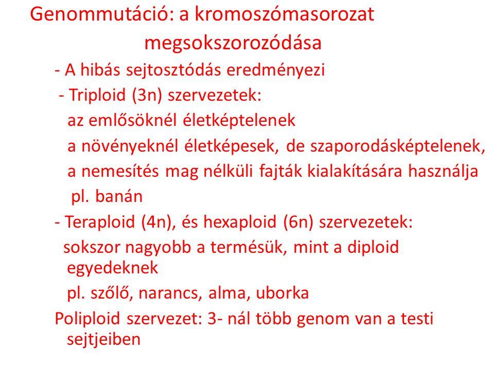 Genommutáció: a kromoszómasorozat megsokszorozódása