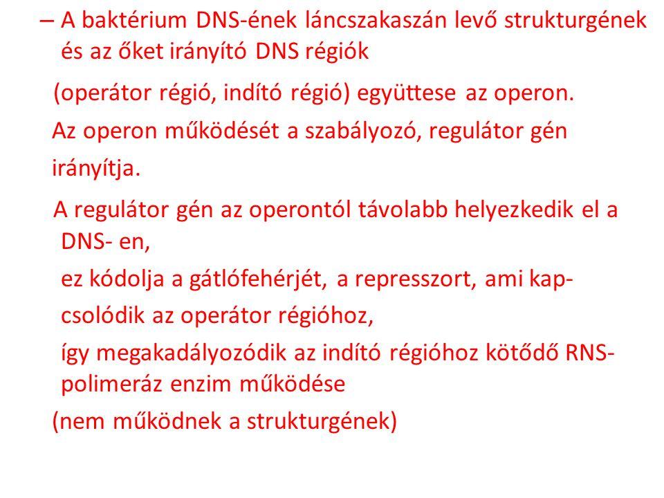 (operátor régió, indító régió) együttese az operon.