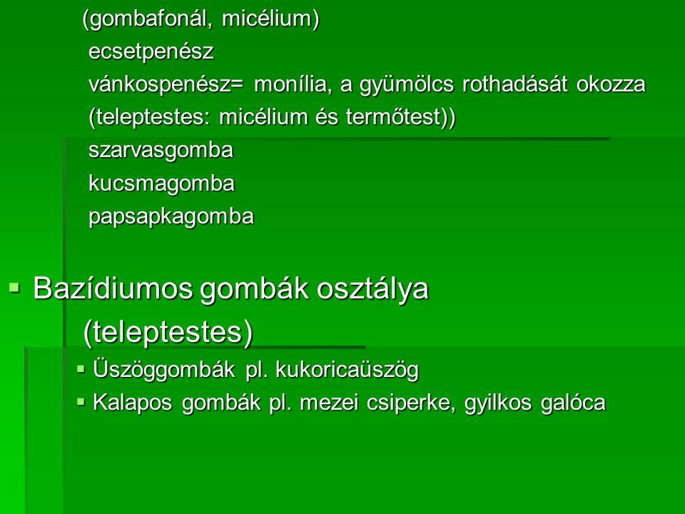 Bazídiumos gombák osztálya (teleptestes)
